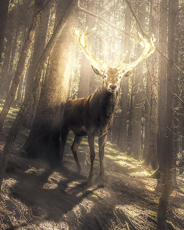 My Deerest - Zoom 1